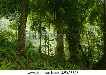 Rainforest in Thailand - stock photo