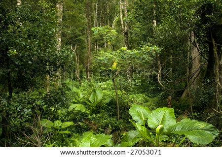 Rainforest in the Bunya Mountains, Queensland, Australia - stock photo