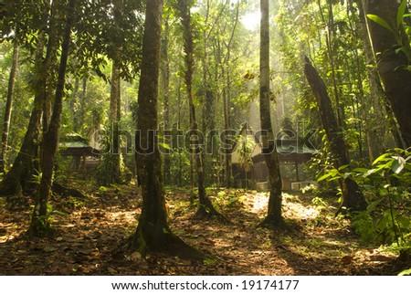 rainforest in yellowish tone - stock photo
