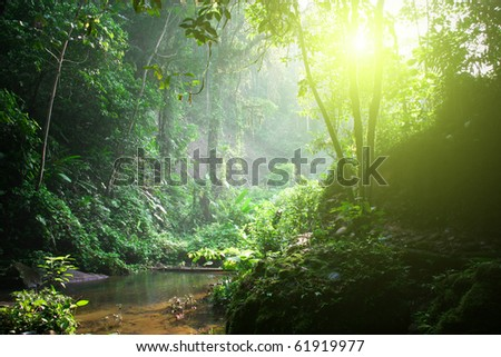 Rainforest. Morning sunlight - stock photo