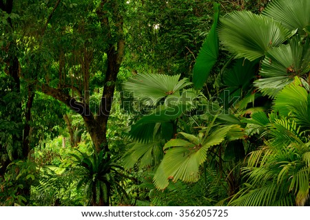 rainforest near Cairns, North Queensland, Australia