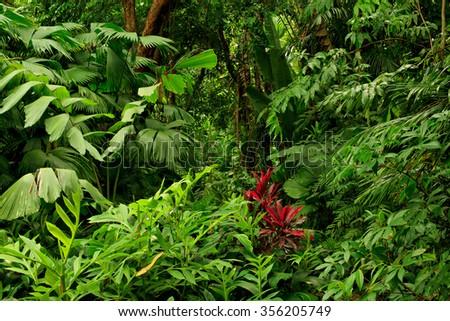 rainforest near Cairns, North Queensland, Australia - stock photo