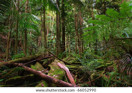 rainforest near the Protestor Falls in New South Wales, Australia - stock photo