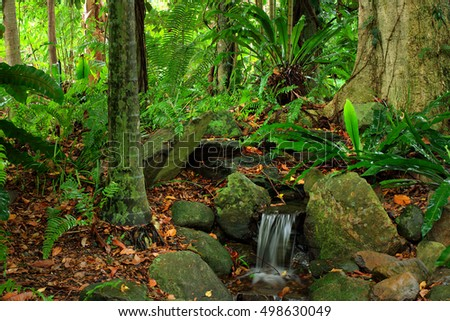 Rainforest, North Queensland, Australia