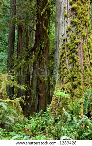 Rainforest on Olympic peninsula, Washington
