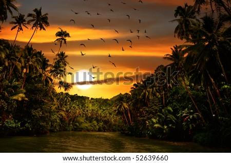 Rainforest safari river cruise with flock of birds in sunset light - stock photo