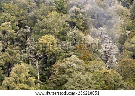 Rainforest, South Island, New Zealand - stock photo