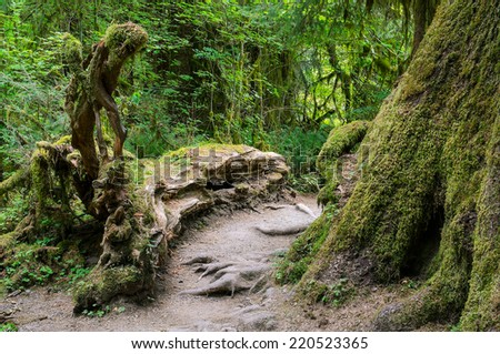 Rainforest Trail in Olympic National Park Washington State USA - stock photo