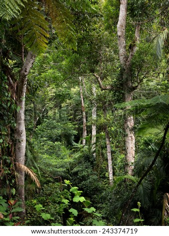 rainforest view - stock photo
