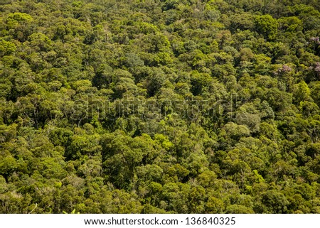 Rainforest view from above - stock photo