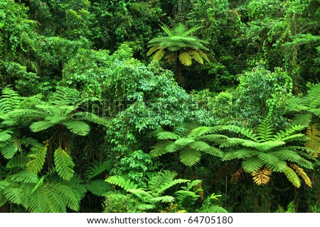 rainforest with fern trees in North Queensland, Australia - stock photo