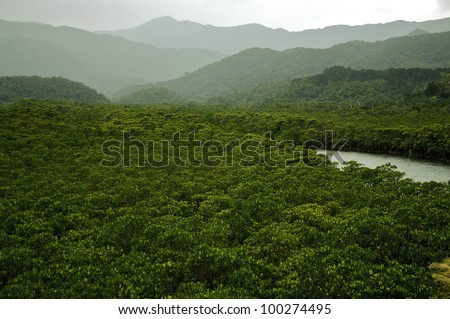 Rainforest with river in the tropics. An untouched wilderness. - stock photo