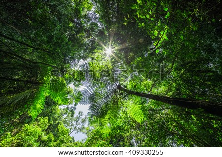 rainforest with the sun behind - stock photo