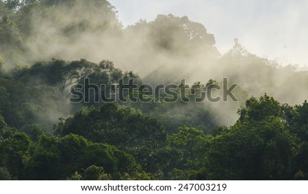 Rainforests filled with steam and moisture, Khao Yai National Park - stock photo