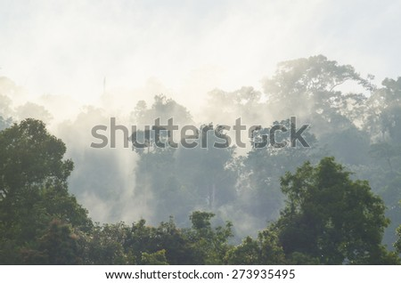 Rainforests filled with steam and moisture, Khao Yai National Park, Thailand - stock photo