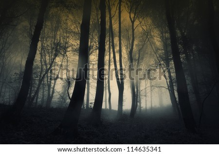 rainy dark forest at sunset - stock photo