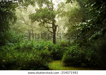 Rainy day in a forest with fog between green trees - stock photo