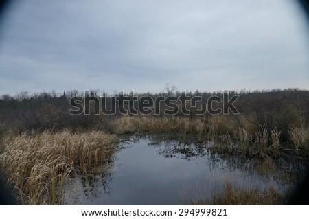rainy day in a swamp Louisiana - stock photo