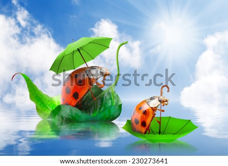 Rainy day in nature. Little ladybugs with umbrella floating on spring flood. - stock photo