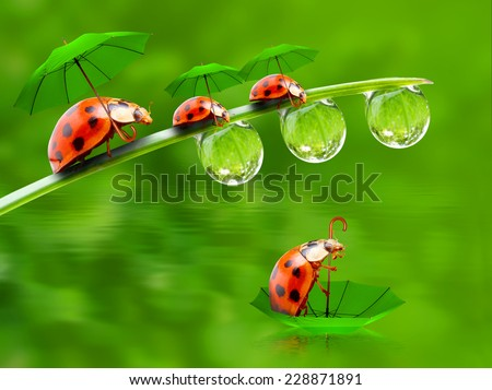 Rainy day in nature. Little ladybugs with umbrella over pond.  - stock photo