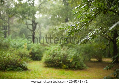 Rainy day in summer forest  - stock photo