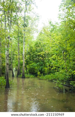 Rainy Day In The Louisiana Bayou Stock Photo