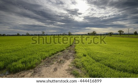 Rainy season landscape with green grass, cloudy and sunset - stock photo