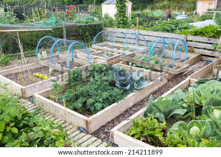 Raised beds in an allotment garden - stock photo