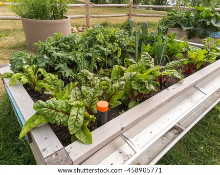 Raised garden beds in community garden