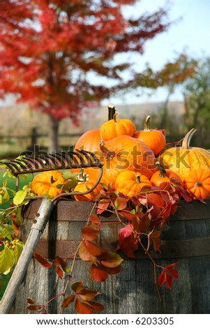 Rake and pumpkins laying on wine barrel - stock photo