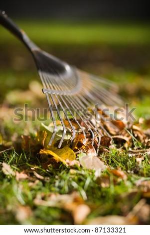 rake raking autumn leafs in the garden - stock photo