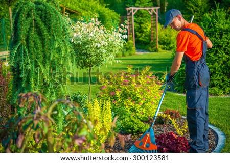 Raking in the Garden. Gardener with Rake at Work. Backyard Garden Summer Clean Up. - stock photo
