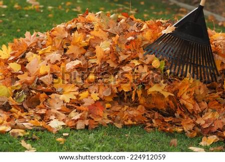 Raking leaf pile - stock photo