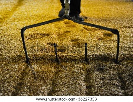 Raking malted barley - stock photo
