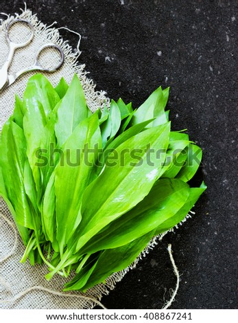 ramson (bear garlic) bunch tied with rope on old dark black background  scissors skein - stock photo