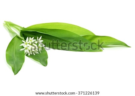 ramson isolated on white background - stock photo