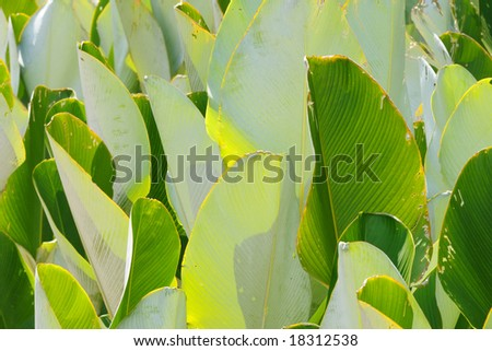 random layers and shades of green leaves abstract
