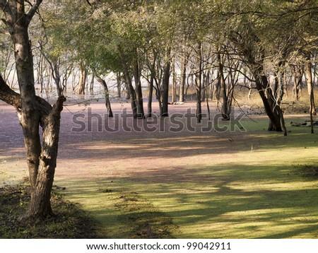 Ranthambore National Park. India - stock photo