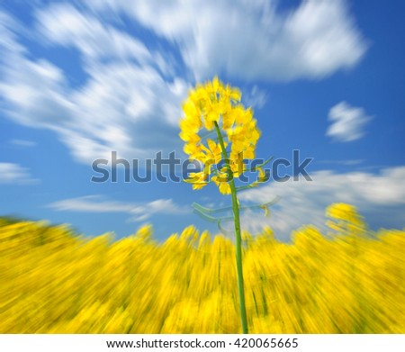 Rape agriculture ecology commodity - stock photo