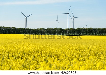 Rape field with windmills.