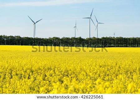 Rape field with windmills. - stock photo