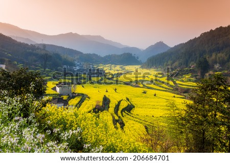 Rape flowers and Chinese ancient buildings in Wuyuan, China - stock photo