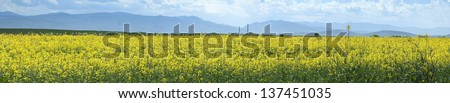 Rape plantation and factory on the background - stock photo