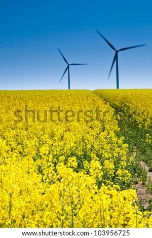 Rape seed Field with wind turbines - stock photo