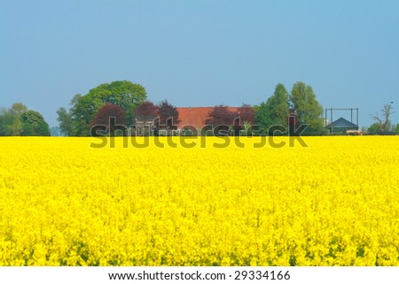 Rapeseed Field and farm house, The Netherlands - stock photo