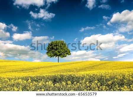 Rapeseed field and lone tree landscape - stock photo