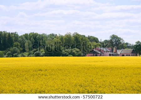 Rapeseed field and pink plant - stock photo