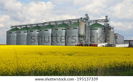 Rapeseed field and silo at farm - stock photo