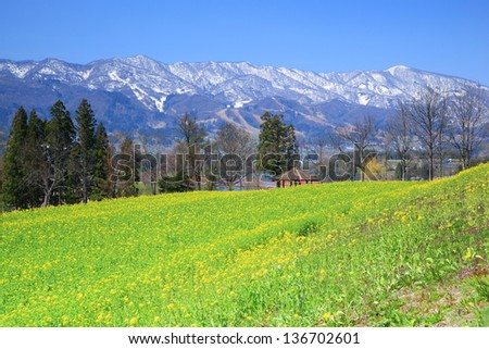 Rapeseed field and snow mountain, Iiyama city, Nagano, Japan - stock photo