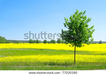 rapeseed field and tree - stock photo